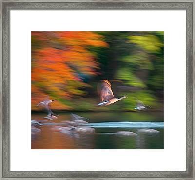 Ghost Geese Framed Print