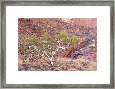 Ghost Gum Framed Print