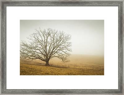 Tree In Fog - Blue Ridge Parkway Framed Print