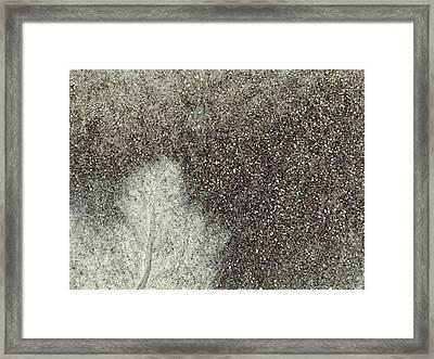 Ghost Leaf Framed Print