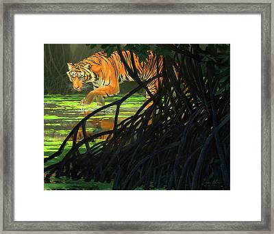 Ghost Of The Sunderbans - Bengal Tiger Framed Print