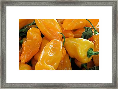 Ghost Peppers Framed Print by Kristin Elmquist