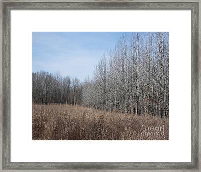 Ghost River Bottomland Lagrange Tn Framed Print by Lizi Beard-Ward
