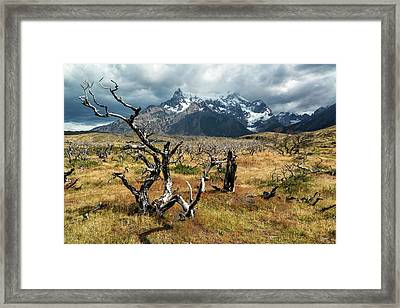 Framed Print featuring the photograph Ghost Trees Of Patagonia by Stuart Gordon