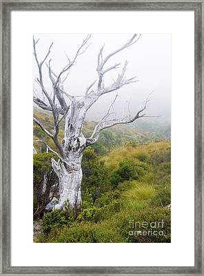 Framed Print featuring the photograph Ghost by Werner Padarin
