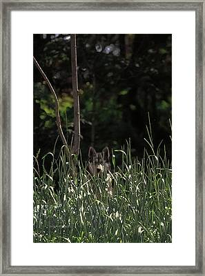 Ghost Wolf Framed Print by DigiArt Diaries by Vicky B Fuller
