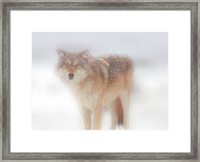 Ghost Wolf Framed Print