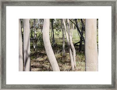 Ghostly Gums Framed Print