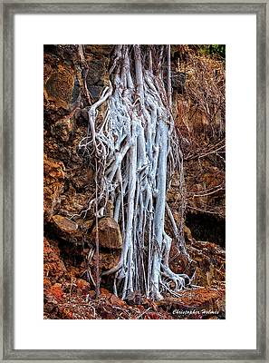 Ghostly Roots Framed Print by Christopher Holmes