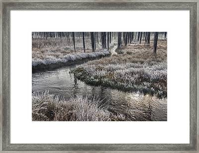 Ghosts Of Nature Framed Print by Mark Kiver