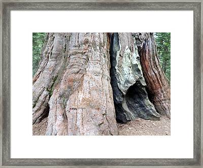 Giant 5 Framed Print by Eric Forster