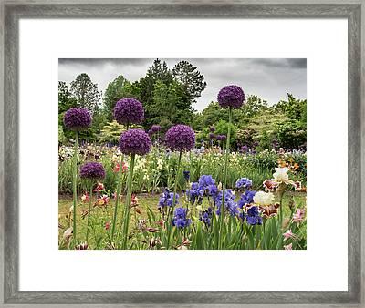 Giant Allium Guards Framed Print
