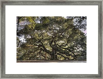 Giant Angel Oak Tree Charleston Sc Framed Print