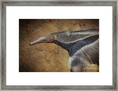 Giant Anteater Portrait Framed Print by Jamie Pham