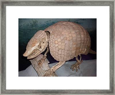 Giant Armadillo 2 Framed Print by Warren Thompson