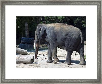 Giant Asian Elephant Framed Print by Brendan Reals