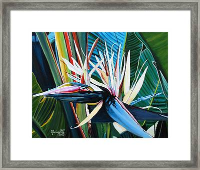 Giant Bird Of Paradise Framed Print