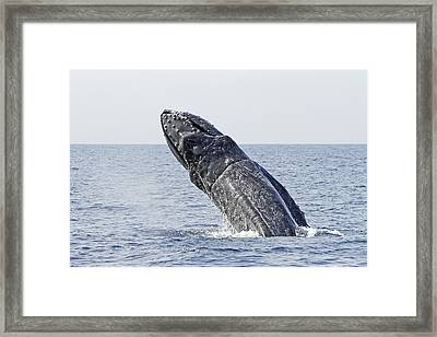 Giant Breach Framed Print