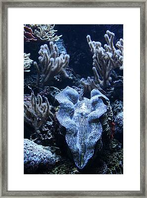 Giant Clam Framed Print by Karl Reid