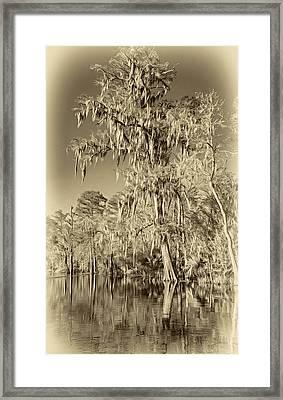 Giant Cypress 2 - Sepia Framed Print by Steve Harrington