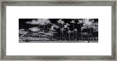 Giant Dandelions. Framed Print by Sean Davey