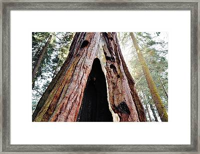 Giant Forest Giant Sequoia Framed Print by Kyle Hanson