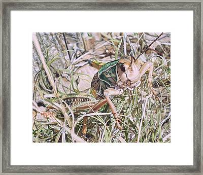 Giant Grasshopper Framed Print by Joshua Martin