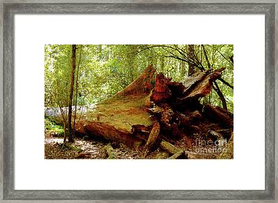 Giant Has Lived Its Life Framed Print