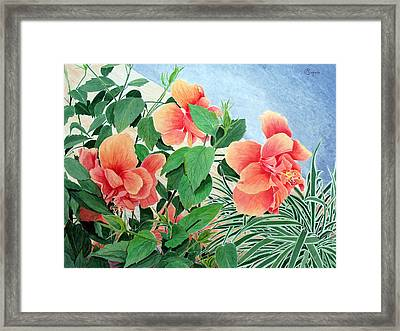 Giant Hibiscus Framed Print by Colleen Marquis