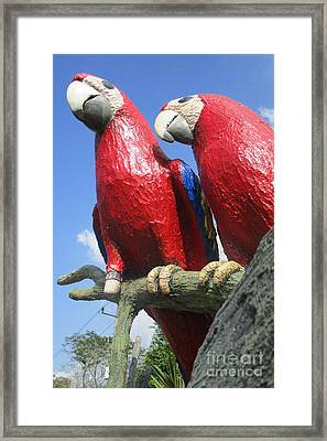 Giant Macaws Framed Print by Randall Weidner