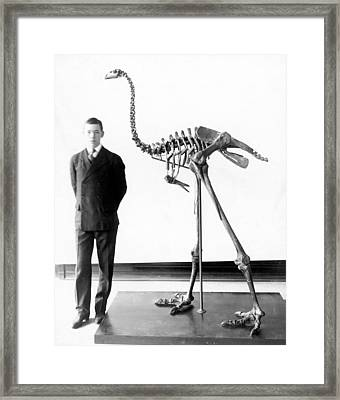 Giant Moa Skeleton Framed Print
