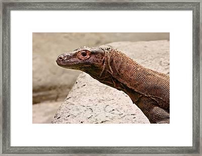 Giant Monitor Lizard 2 Framed Print by Douglas Barnett