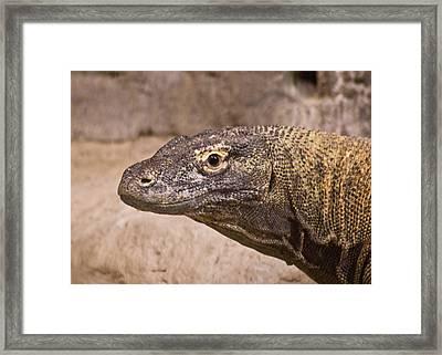 Giant Monitor Lizard Framed Print by Douglas Barnett