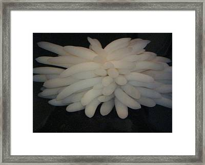 Framed Print featuring the photograph Giant Octopus Egg Sac by Carrie Maurer