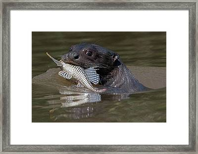 Framed Print featuring the photograph Giant Otter #1 by Wade Aiken