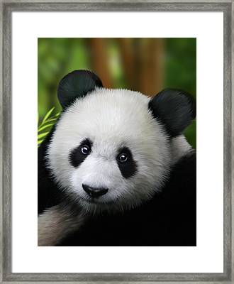Giant Panda Framed Print by Julie L Hoddinott