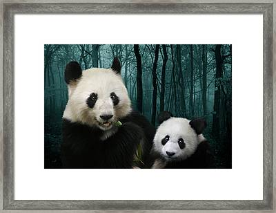 Giant Pandas Framed Print by Julie L Hoddinott