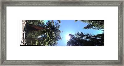 Giant Redwood Framed Print by Beverly Johnson