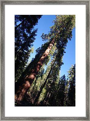 Giant Redwood Trees Framed Print by Jeff Lowe