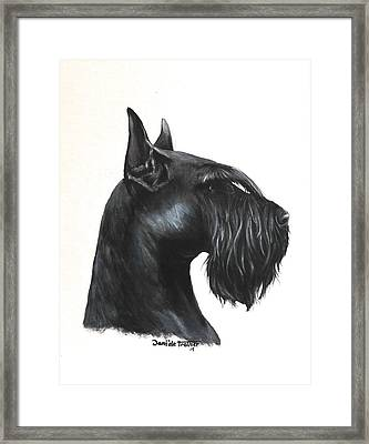 Giant Schnauzer Framed Print by Daniele Trottier