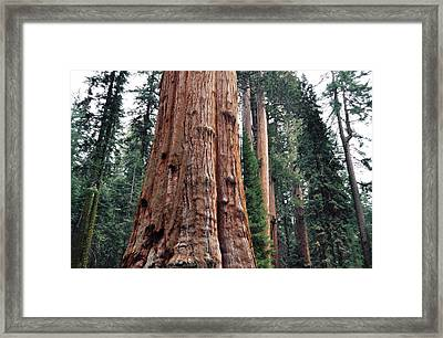 Framed Print featuring the photograph Giant Sequoia II by Kyle Hanson