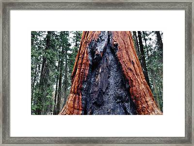 Framed Print featuring the photograph Giant Sequoia by Kyle Hanson