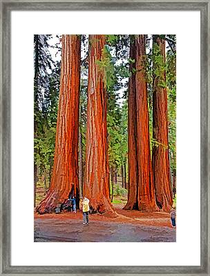 Giant Sequoias Framed Print by Dennis Cox