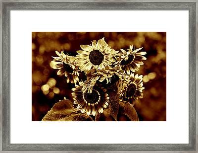 Giant Sunflowers Framed Print by Kathleen Stephens