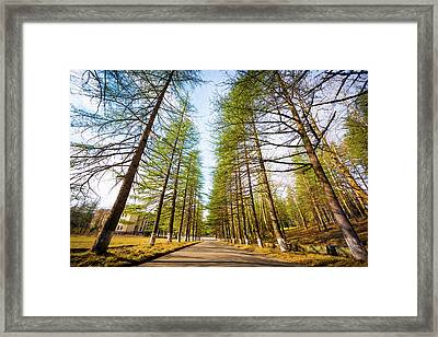 Giant Trees Framed Print by Svetlana Sewell