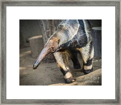 Giant Walking Framed Print by Jamie Pham