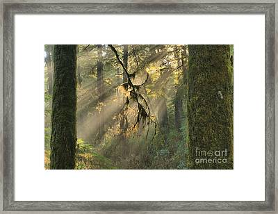 Giants And Light Beams Framed Print by Adam Jewell