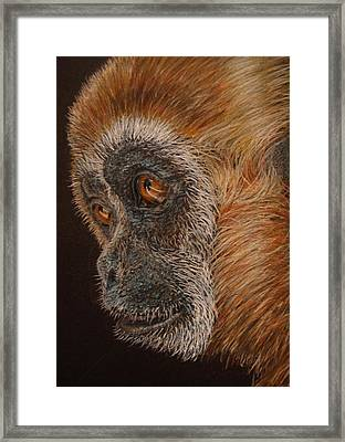 Framed Print featuring the drawing Gibbon by Karen Ilari