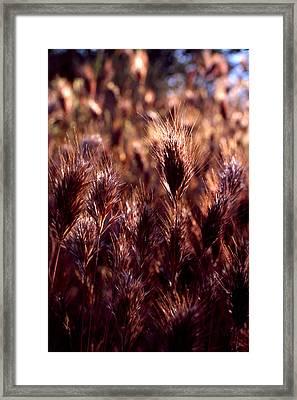 Gideon Framed Print