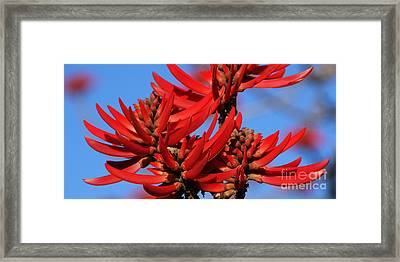 Gift Of Zimbabwe Framed Print by Linda Shafer